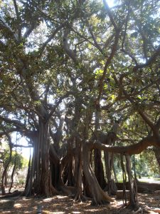 Jardin de Palermes